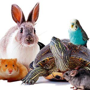 Корм для других животных (хомяки, попугаи и т.д.)